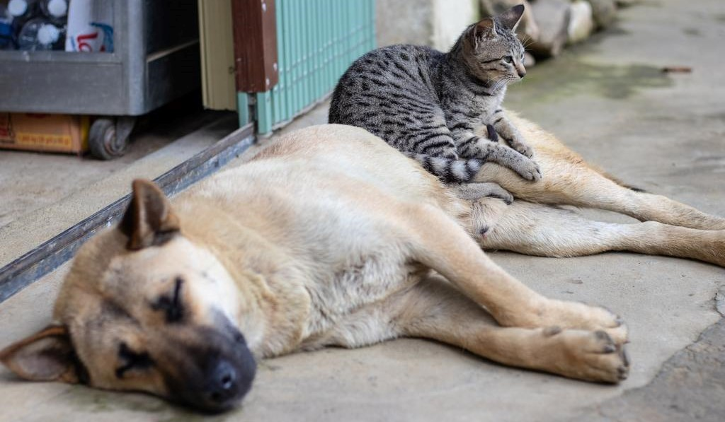 On The Mortality of Cats and Dogs